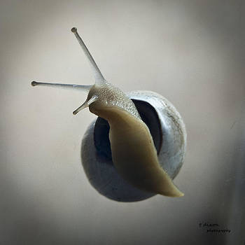 Snail with a Twist by Teresa Dixon