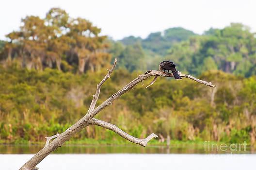 Photos By  Cassandra - Snake Bird on the River