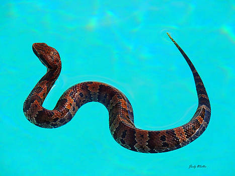 Snake by Judy  Waller