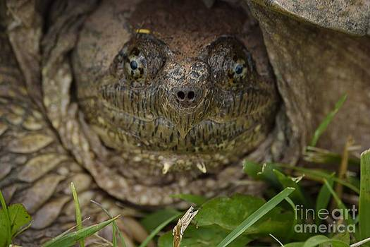 Snapper by Randy Bodkins