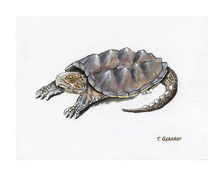 Snapping turtle Chelydra serpentina by Anthony Gerardi