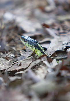 Sneaky Snake by Boris Blyumberg