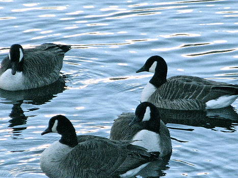 Sandy Tolman - Snow 01-03-14 -- 8116 Geese