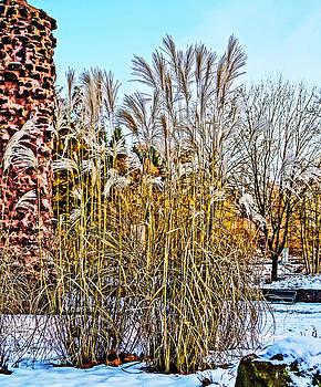 Alexander Drum - snow and reeds
