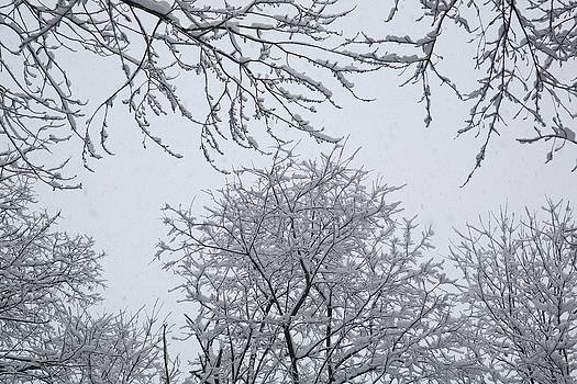 Frank Romeo - Snow and Trees