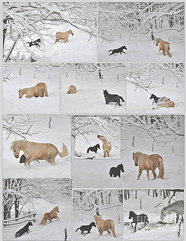 Snow Angels Paso Fino Style by Patricia Keller