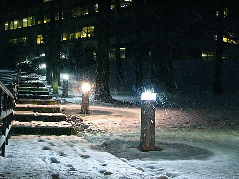 Sandy Tolman - Snow at Night - Pathway Lights 0322