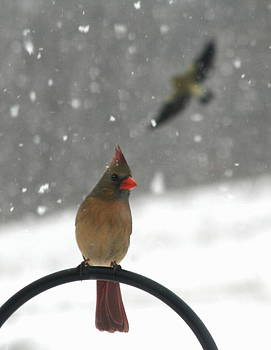 Snow Bird II by Diane Merkle