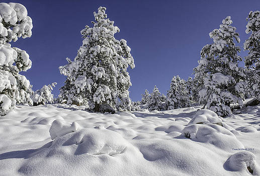 Snow Bomb by Tom Wilbert