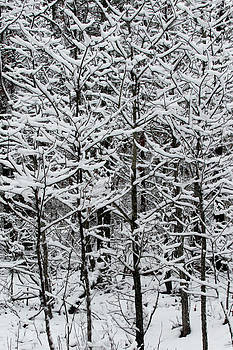 Carolyn Stagger Cokley - snow branches
