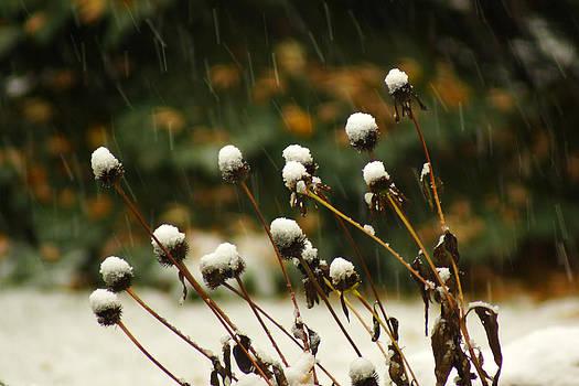 Snow Caps by Jann Kline