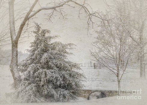 Snow Clipper by Pamela Baker