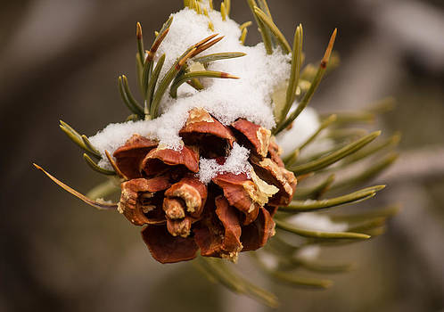 Snow Cone by Dawn Morrow