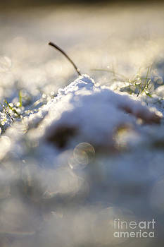 Snow Cover by Sue OConnor