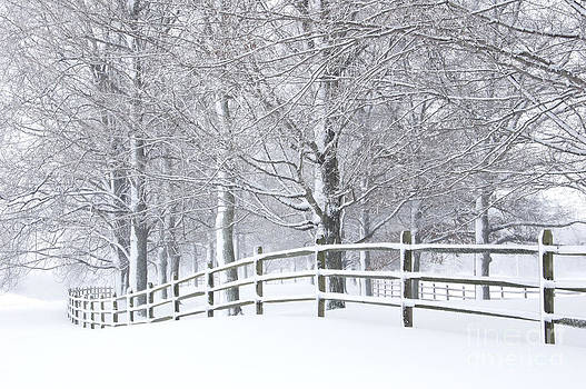Oscar Gutierrez - Snow covered fence and trees
