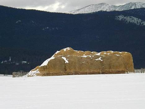 Snow Covered Hay by Misty Ann Brewer