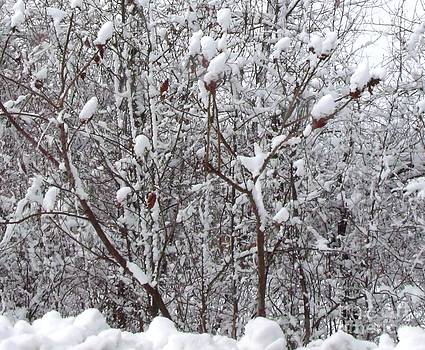 Gail Matthews - Snow covered Sumac Tree
