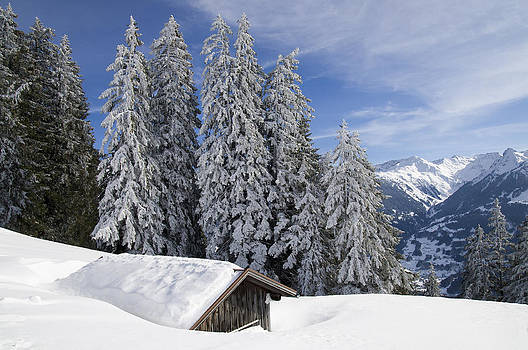 Snow covered trees and mountains in beautiful winter landscape by Matthias Hauser