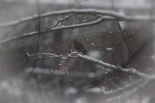 Snow Day by Christina Durity