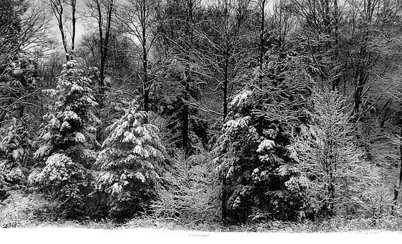 Snow Day by Vickie Szumigala