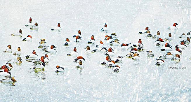 Snow Duckies by Sheila Noren