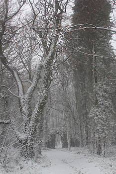 Snow etched by Jenny A Jones