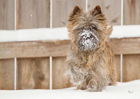 Snow Face by Heidi Marcinik