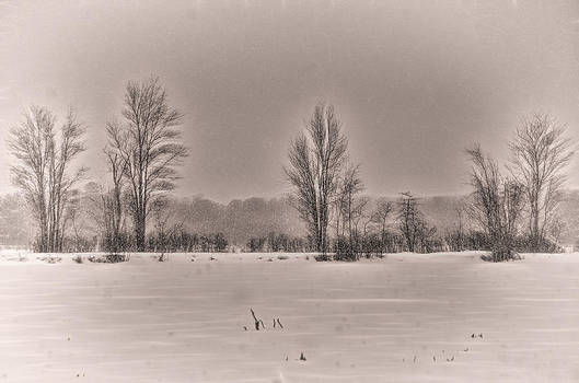 Snow Falling on Bare Trees 2 by Beth Sawickie