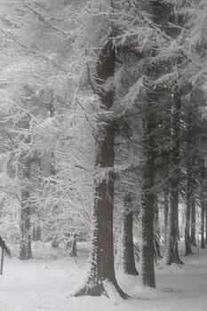 Snow fern by Jenny A Jones