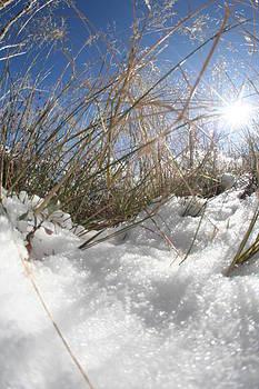 Snow Grass by David S Reynolds