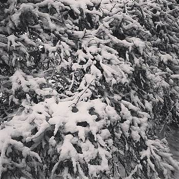 #snow #ilovesnow #verysnowy #lastweek by Samantha Rash