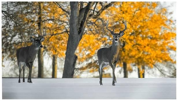 Snow in Autumn  by Garett Gabriel