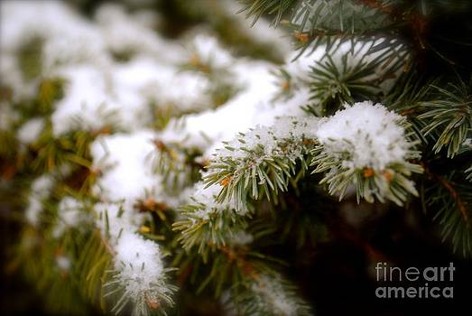 Snow in the Pines by Parker O'Donnell