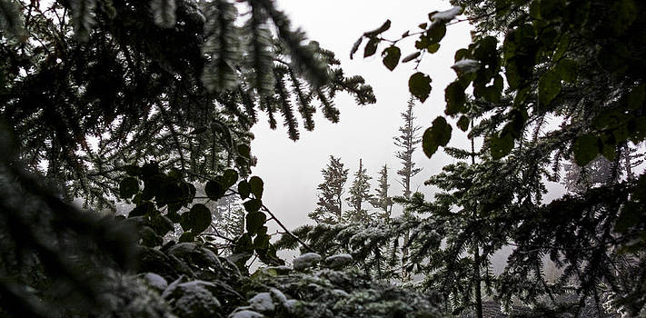 Snow in Trees at Narada Falls II by Greg Reed