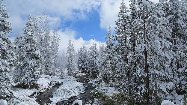 Snow in Yellowstone by Diane Mitchell