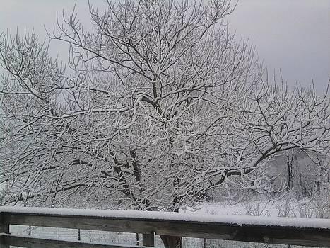 Snow by Jeni Tharp