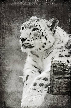 Linda Sannuti - Snow Leopard 2