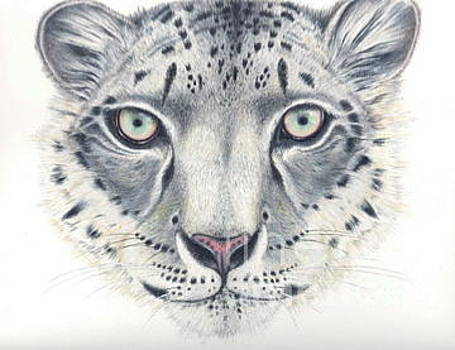 Snow Leopard by Elizabeth H Tudor