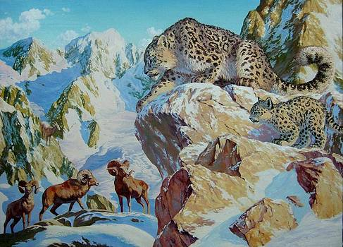 Snow Leopard is hunting by Tsogbayar Chuluunbaatar