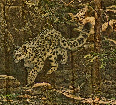 Joe Bledsoe - Snow Leopard