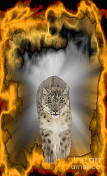 Snow Leopard Jumping thru Fire by Heinz G Mielke
