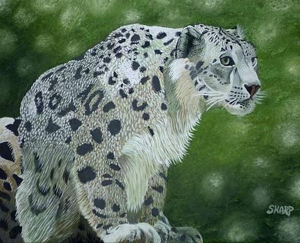 Snow Leopard by Karen Sharp