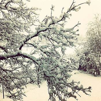 #snow #nature #snowday #love #igdaily by Julia Goldberg