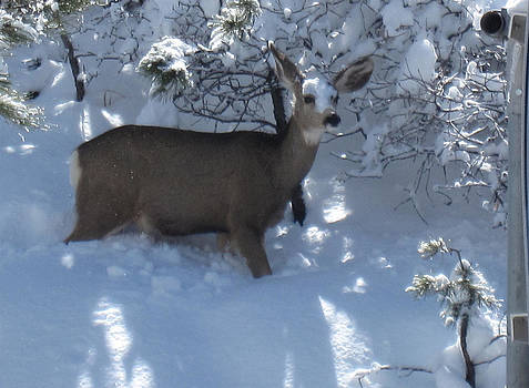Snow On My Face by Tammy Sutherland
