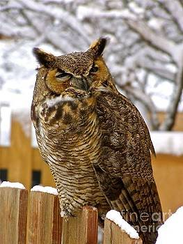 LeLa Becker - Snow on owl