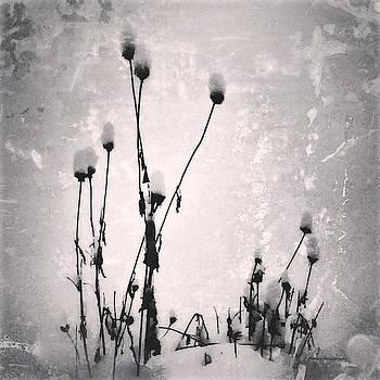 Snow on Pods by Patricia Januszkiewicz