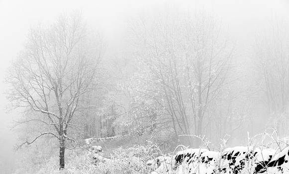 Snow on the Blue Ridge Parkway by Greg Reed