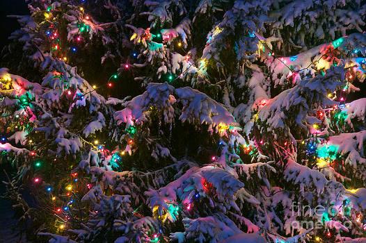 Mark Dodd - Snow on the Christmas Tree