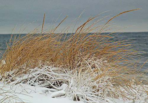 Snow on the dunes by Nancy Landry