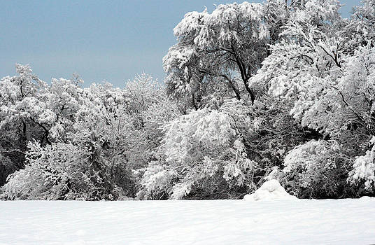 Snow on the Trees by Laurie Poetschke